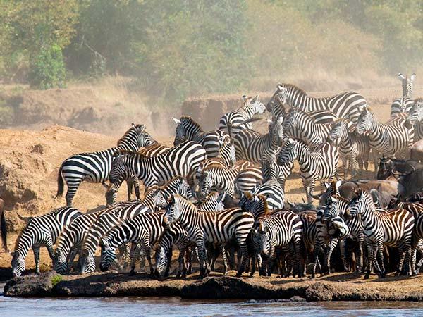 Rejser til Kenya