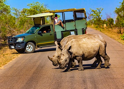 Game drive i Kruger National Park